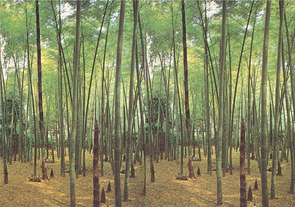 Bamboo grove wall mural 1801 for Bamboo wall mural